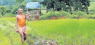 కారడవిలో కాటన్ వారసులు